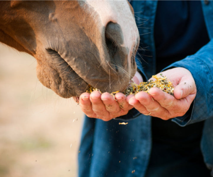 The Four Cornerstones of Equine Wellness