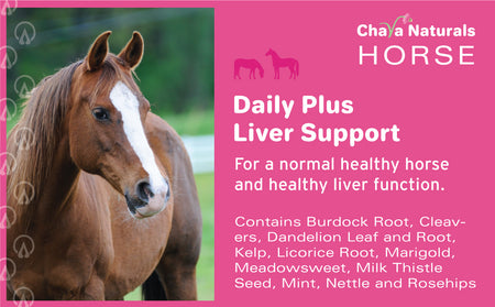 Daily Health plus Liver Support for Horses