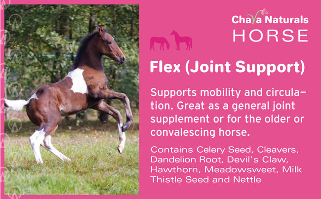 Flex (Joint Support) for Horses