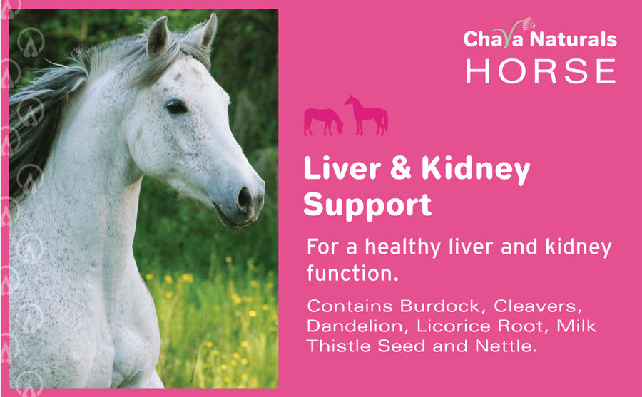 Liver and Kidney Support for Horses (Milk Thistle Seed Mix)