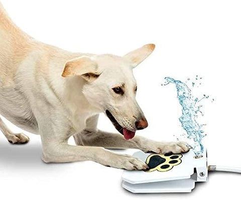 step on drinking fountain for dogs
