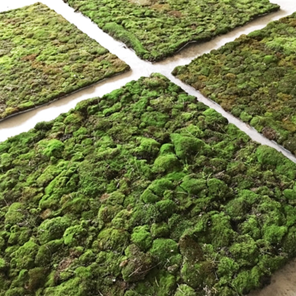 Live Moss Panels for Sun or Shade - Interior or Exterior Features!