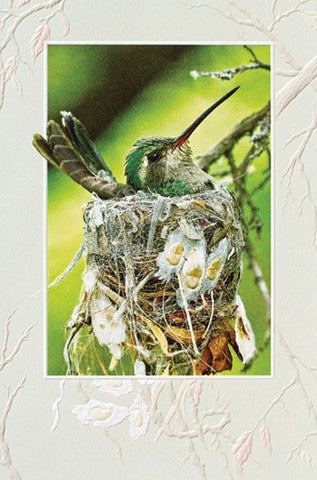 "Home Sweet Home is a new baby/welcome baby card featuring hummingbird artwork by Vic Schendel. Pumpernickel Press. Made in USA. Includes 1 card and 1 envelope. 8-1/4"" x 5-3/8"""