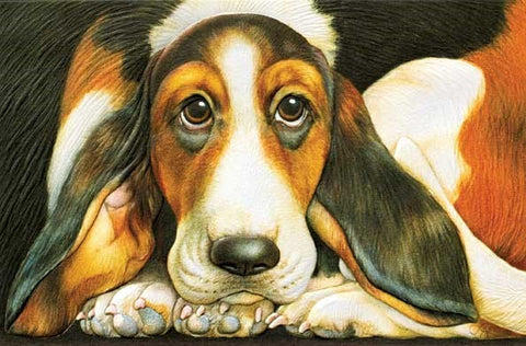 "Basset Hound is a get well soon card featuring dog artwork by Tammy Herriman. Pumpernickel Press. Made in USA. Includes 1 card and 1 envelope. 8-1/4"" x 5-3/8"""