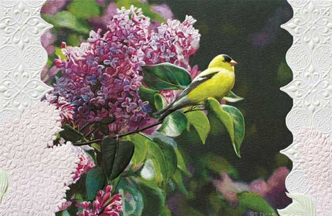 "Goldfinch in Lilac is a thinking of you card featuring wildlife artwork by Terry Isaac. Pumpernickel Press. Made in USA. Includes 1 card and 1 envelope. 8-1/4"" x 5-3/8"""
