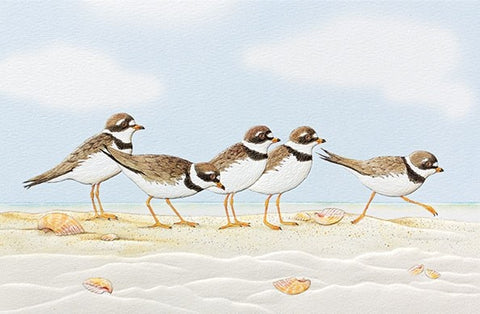 "Playful Plovers is a card about coping featuring wildlife artwork by Mary ""Ching"" Walters. Pumpernickel Press. Made in USA. Includes 1 card and 1 envelope. 8-1/4"" x 5-3/8"""