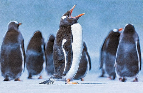 Gentoo Penguin Birthday Card