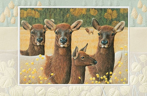 "Heads Up is a birthday card featuring wildlife artwork by Shane Dimmick. Pumpernickel Press. Made in USA. Includes 1 card and 1 envelope. 8-1/4"" x 5-3/8"""