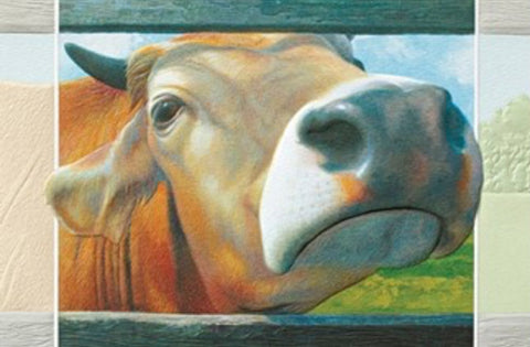 An embossed birthday card featuring a brown Swiss dairy cow peeking through a fence.  Artwork by Penny Hauffe.