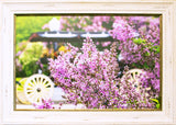 Lilacs in Bloom - Photography