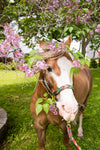 "Lilacs & A Hungry Horse by Jennifer Wohletz.  Photography on canvas mounted on black styrene. 10"" x 15""  Description:  A horse at Mackinac Island's Little Barn munches on lilacs as an afternoon snack."