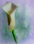 Painterly Flower Portrait #3