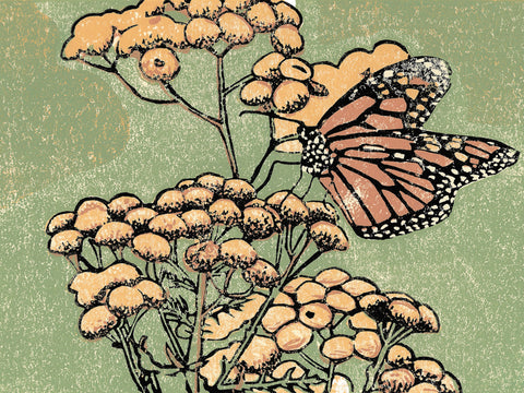 Monarch on Tansy is an original multi-media linoleum block print by Michigan artist Natalia Wohletz of Peninsula Prints.  The butterfly art print features a monarch sipping nectar from vibrant yellow tansies. It makes a great gift for nature and butterfly lovers!