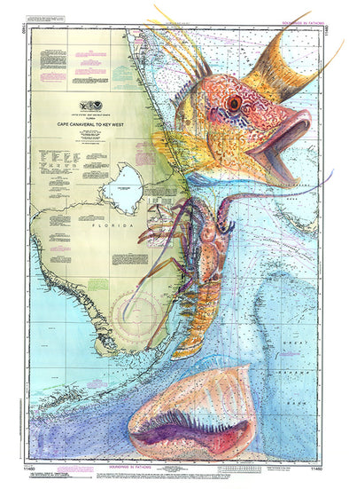 Florida Hogfish
