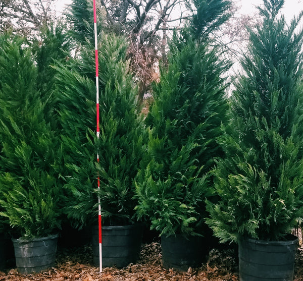 2020 Tree Buy-Out