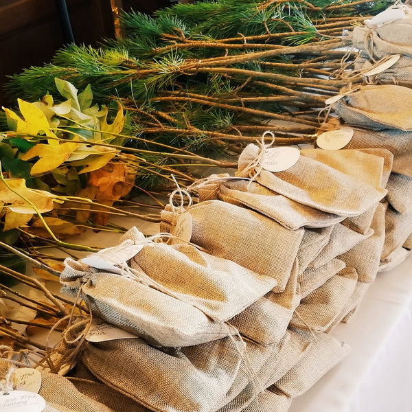 Tree Seedling  Favors