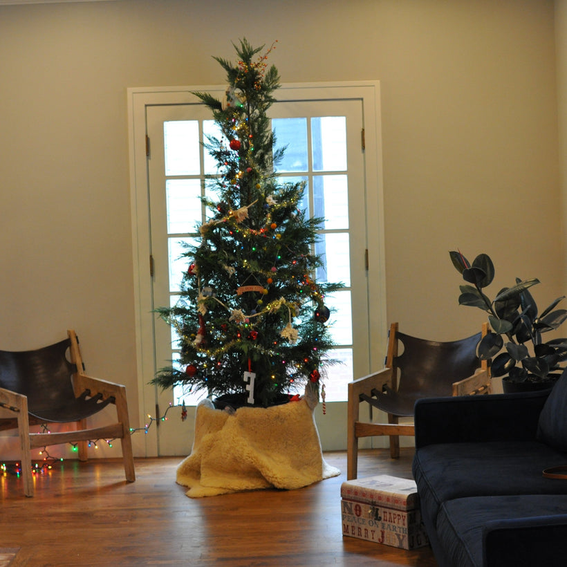 Tulsa Sustainable Christmas Tree Rentals