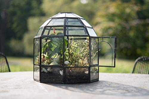 "Urban Born Glass Terrarium, Birdcage - 9""x9""x10"" (Urban Black Steel, Large)"