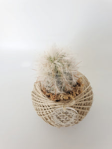 Cactus kokedama - Where The Green Things Are