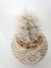 Load image into Gallery viewer, Cactus kokedama - Where The Green Things Are