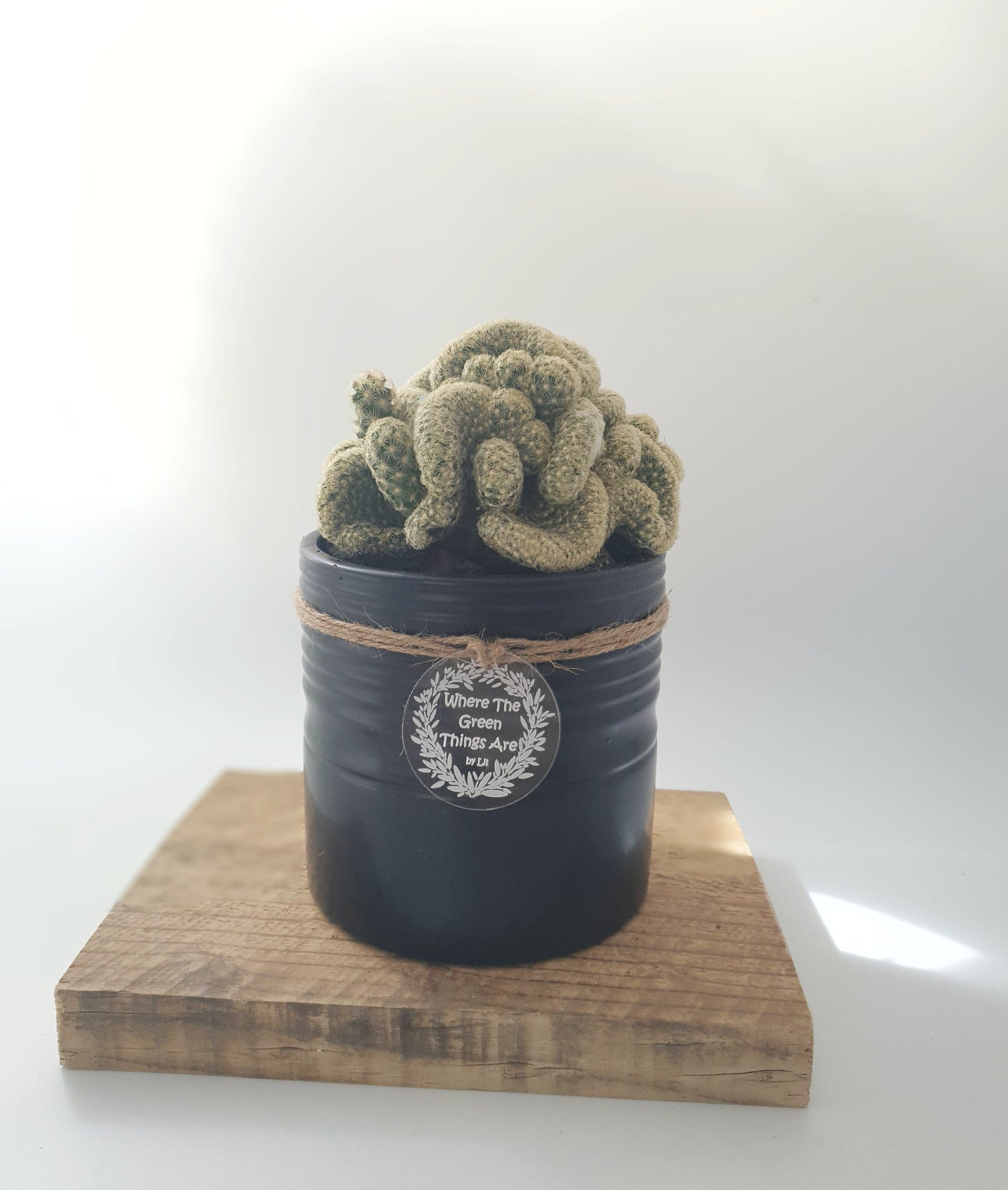 Brain cactus in black pot - Where The Green Things Are