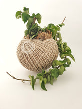 Load image into Gallery viewer, Hindu rope hoya kokedama