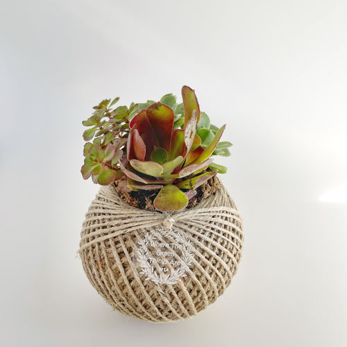 Succulent terrarium ball 1 MEDIUM