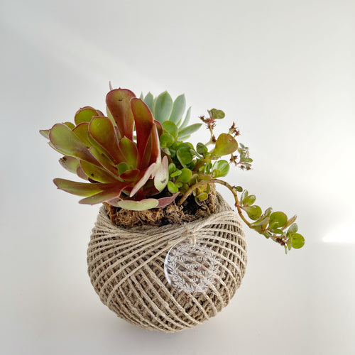 Succulent Terrarium Ball 2 MEDIUM