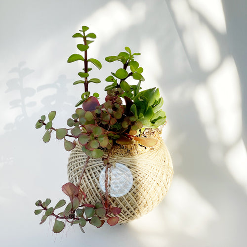 Succulent Terrarium Ball 3 MEDIUM