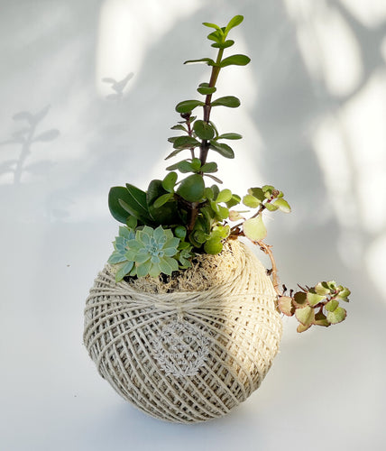 Succulent Terrarium Ball 4 MEDIUM
