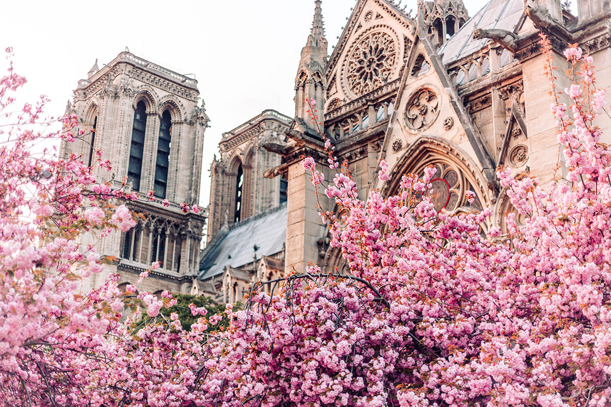 SPRING IN PARIS: THE BEST VIEWING SPOTS FOR BLOSSOM SEASON