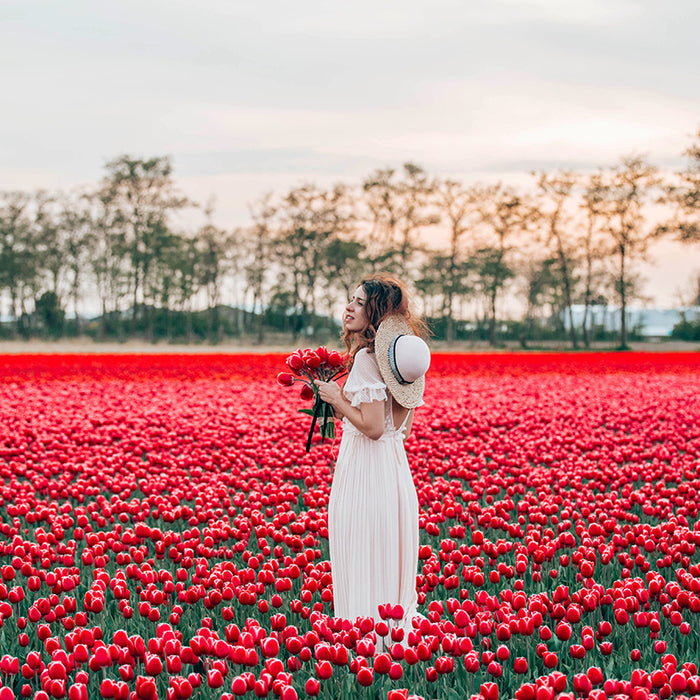 VISITING HOLLAND DURING TULIP BLOSSOM SEASON
