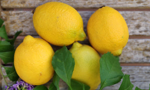 Lemons ~ 160g (we will have different sizes)