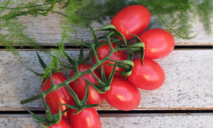 Small tomatoes on a twig. We offer to buy twigs, one weighs ~ 200g