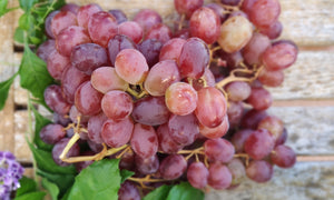 Sweet pitted red grapes. We offer to buy a bunch that weighs ~ 200g