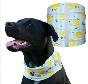 """LEMON ZEST"" Reflective Dog Shield"