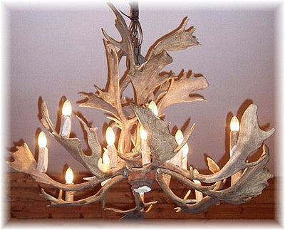 17 Antler, 16 Light Fallow Deer Antler Cascading Chandelier