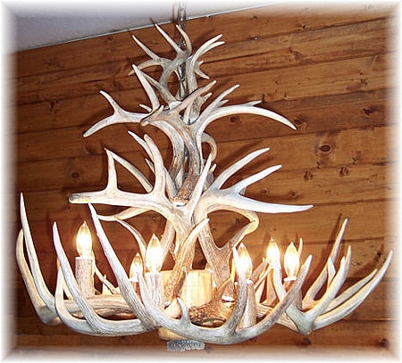 22 Antler, 8 Light Cascading Whitetail Antler Chandelier