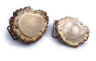 Elk Antler Burr Belt Buckle