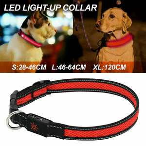 USB Rechargeable LED Dog Collar/ Leash Glow Light Up Night Safety Pet Collars Red
