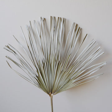 Dried Palm Leaf 20 stems/ bunch or 200 stems/ box
