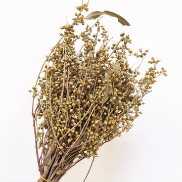 Dried Seeded Eucalyptus