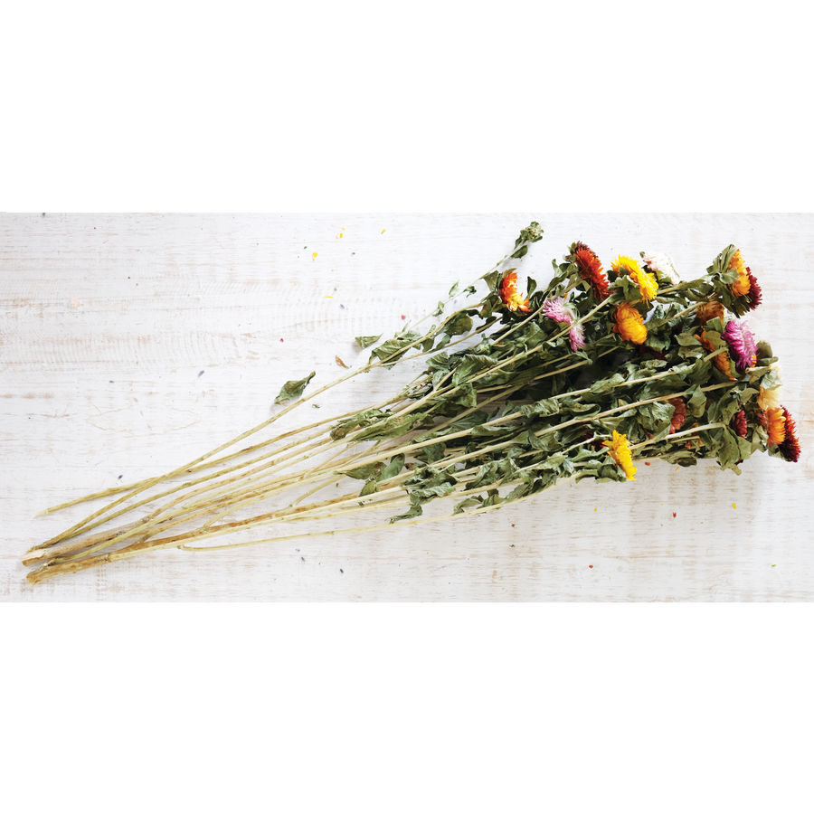 Dried Straw Flower