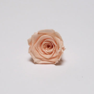 Preserved Roses 6Pcs