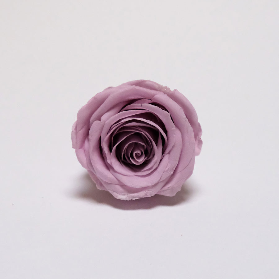Preserved Roses Level A 6Pcs