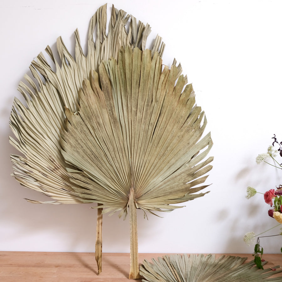 Rustic Dried Palm Leaf - 20 Stems / Bunch