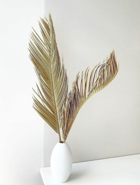 Dried Tan Palm Leaf