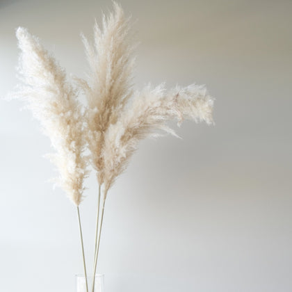 Premium Large White Pampas Grass