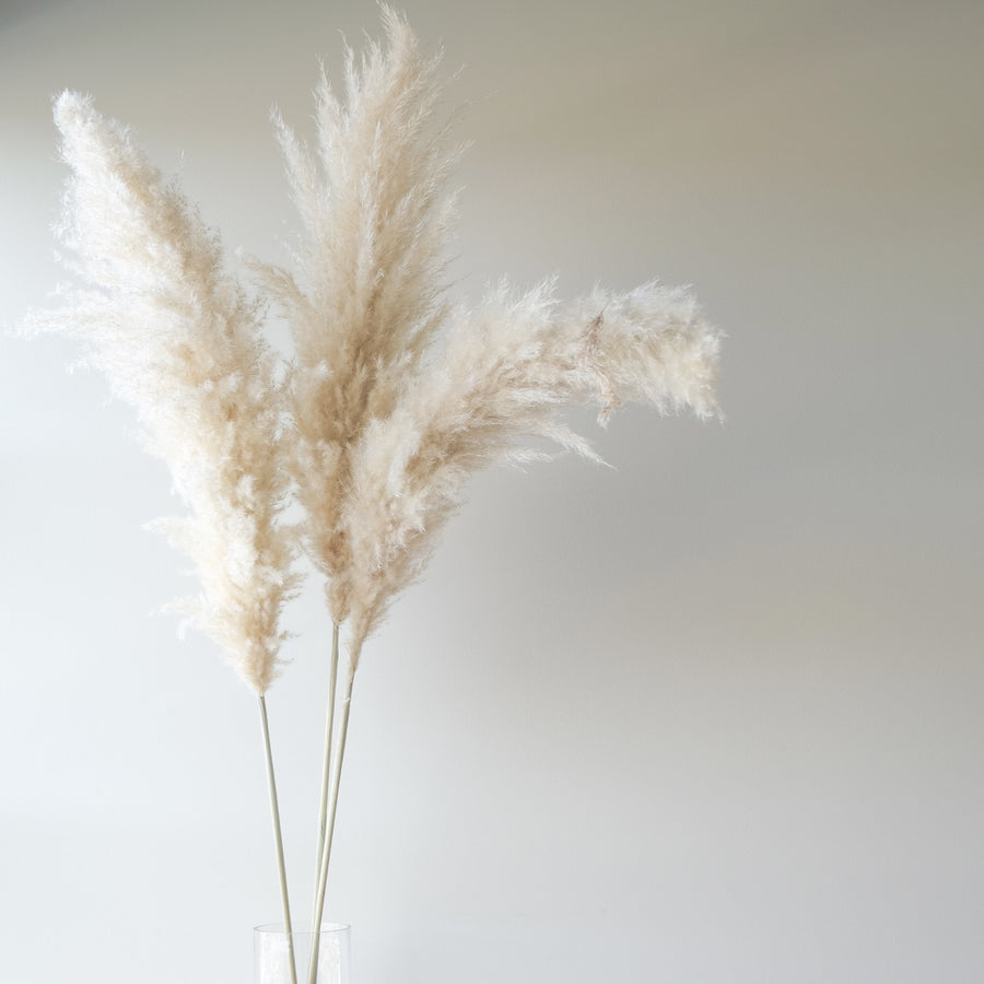 Premium Large White Pampas Grass - 10 Stems/Bunch