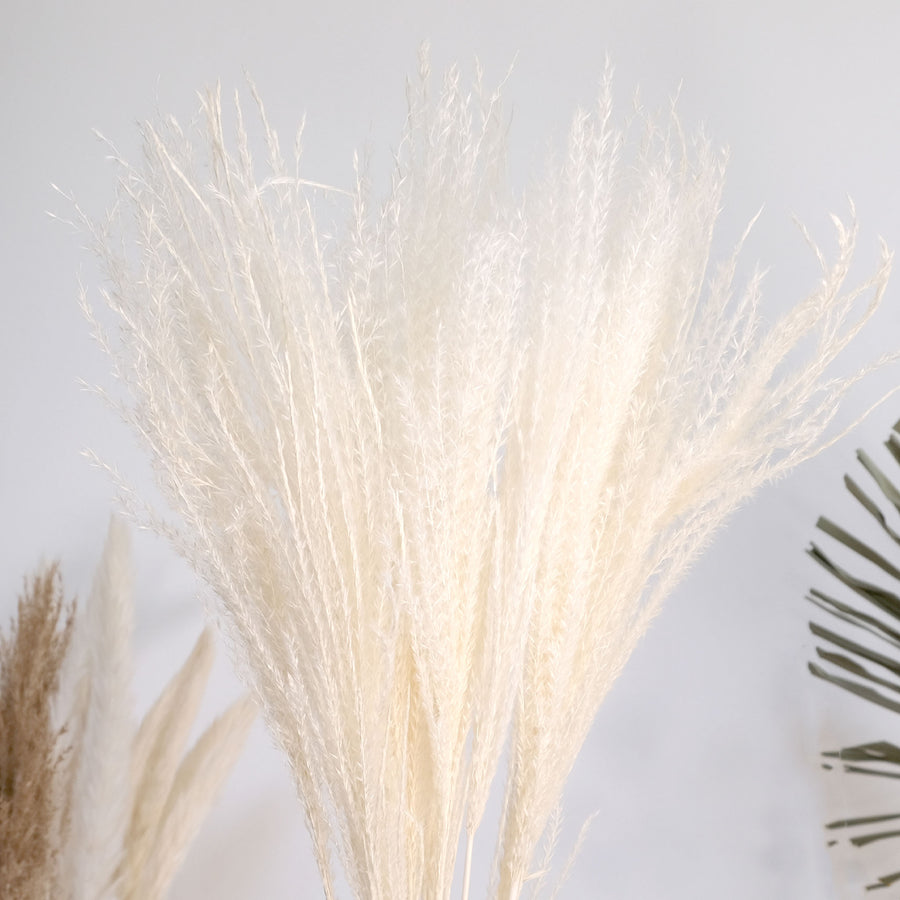 Bleached Dried Maiden Grass Miscanthus - 10 Stems/Bunch